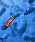 Risikofaktor Gene: Bei ADHS scheinen sie nicht nur eine geringe Rolle zu spielen