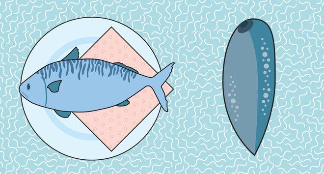 Infografik Fisch Saugwurm
