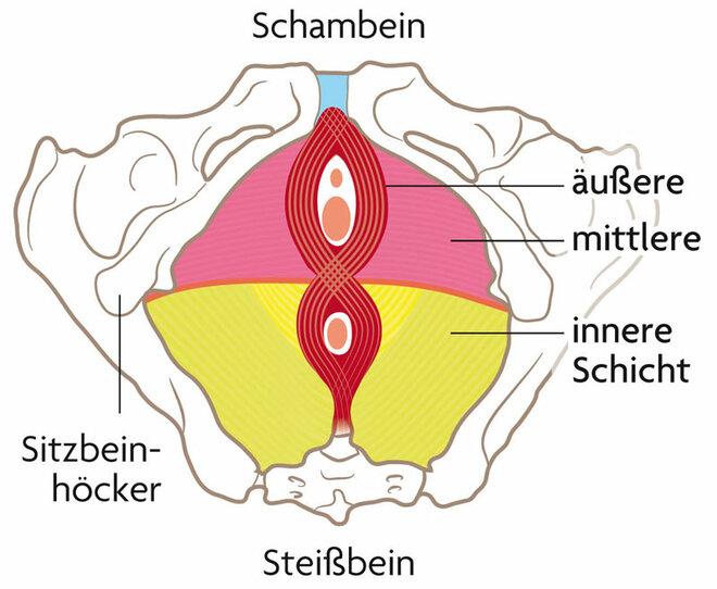 Beckenbodenmuskulatur