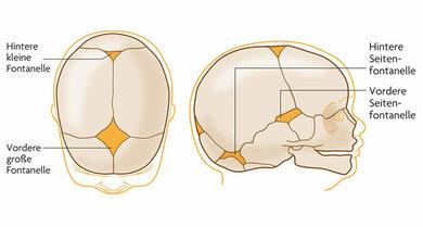 Die Fontanellen: Kommt ein Baby auf die Welt, besteht sein Schädel noch aus fünf Platten, die sich verschieben lassen und zwischen denen Fugen bestehen. Treffen mehrere Fugen aufeinander, bilden sich Lücken – die Fontanellen. Insgesamt gibt es davon sechs Stück. Eltern fühlen vor allem die vordere große Fontanelle.