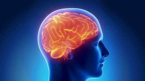 Menschliches Gehirn (Schematische Darstellung)