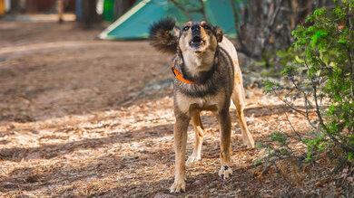 Wenn sich der Respekt vor großen Hunden zu einer Angststörung entwickelt, kann professionelle Hilfe nötig sein