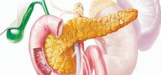 Bauchspeicheldrüse (Schematische Darstellung)