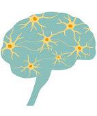Unser Gehirn besteht aus Milliarden von Nervenzellen. Bei zu hohen und zu tiefen Blutzuckerspiegeln gelangt zu wenig Zucker in die Zellen, die ihn als Treibstoff brauchen. Das kann sich etwa durch Konzentrationsstörungen bemerkbar machen