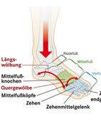 Ein Klick auf die Lupe vergrößert die Grafik: der Aufbau des Fußes