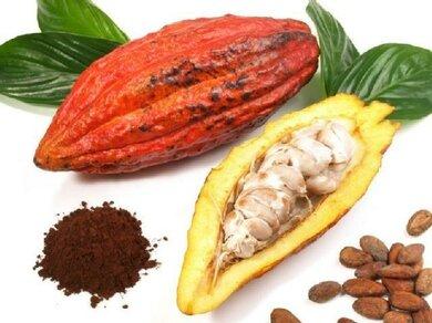 In der Kakaofrucht befinden sich viele Samen – die Kakaobohnen. Aus ihnen wird Kakaopulver hergestellt