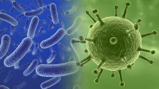 Bakterienvergleich