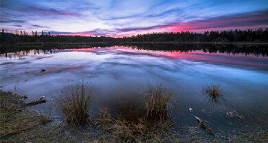 Pink-blaues Tagesende: Hochmoor, Heide und Naturwald Schönramer Filz, Chiemgauer Alpen, Bayern