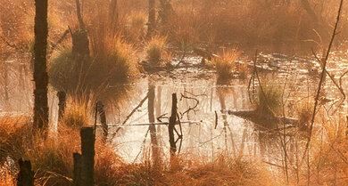 Goldener Morgen: Naturschutzgebiet Venner Moor zwischen Lippe und Ems, Nordrhein-Westfalen