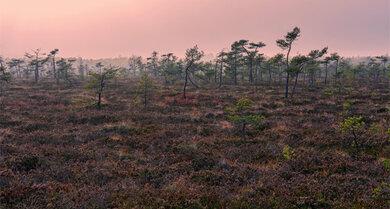 Rosafarbene Dämmerung: Naturschutzgebiet Schwarzes Moor, Biosphärenreservat, Rhön, Unterfranken