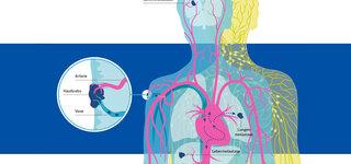 Infografik Blutkreislauf Krebszellen