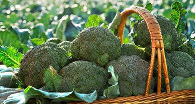 Gemüse mit milder Schärfe: Auch Brokkoli enthält Senföl