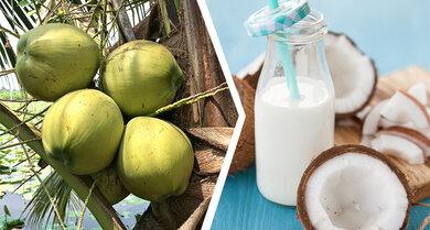 Kokosdrink: Gut geeignet für Süßspeisen. Im Kaffee wegen der Kokosnote häufig gewöhnungsbedürftig