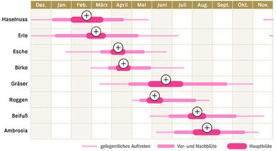 Der Kalender der Stiftung Deutscher Polleninformationsdienst zeigt an, zu welchen Jahreszeiten Pollen in der Luft schwirren