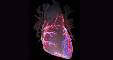 Die Herzkranzgefäße versorgen das Herz mit Blut.