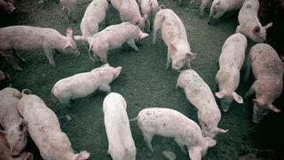 Forscher warnen vor mehr Tierkrankheiten