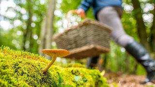 Pilze Sammeln Mythen Sagen Geschichten