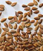 Leinsamen enthalten Quellstoffe, die gut für die Verdauung sind