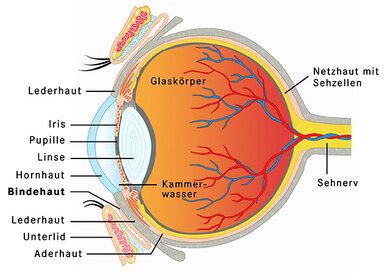 Gehen die Sehzellen der Netzhaut zugrunde, kann es zu Nachtblindheit kommen