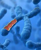 Die Gene bestimmen den BMI mit