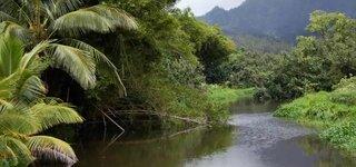 Fluss in den Tropen