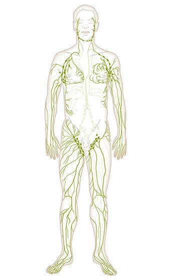 Lymphbahnen und Lymphknoten im Überblick