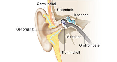 Der äußere Gehörgang erstreckt sich von der Ohrmuschel zum Trommelfell. Es bildet die Grenze zum Mittelohr