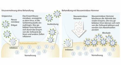 So wirken Neuraminidasehemmer