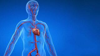 Herz beim Menschen