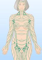 Die Grafik zeigt wichtige Lymphbahnen mit Lymphknoten