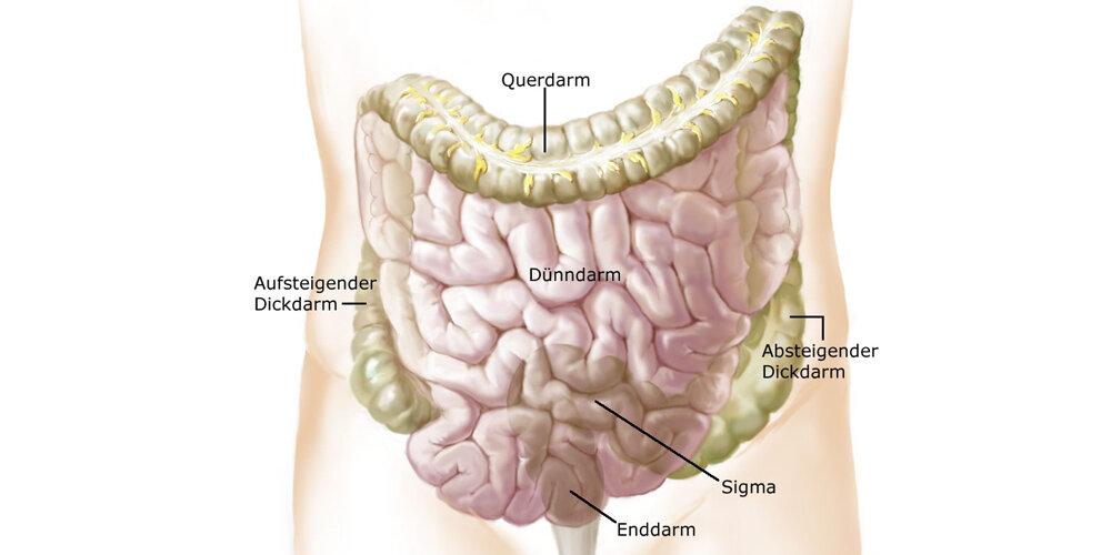 Schmerzen In Der Linken Bauchseite - niasad adi