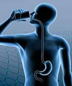 Die Speiseröhre verläuft vom Mund bis zum Magen
