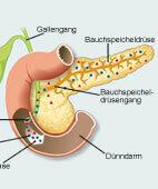Die Bauchspeicheldrüse produziert Amylase und Lipase und gibt sie ab in den Dünndarm