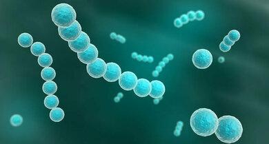 Bakterien wie Streptokokken können eine Mandelentzündung verursachen