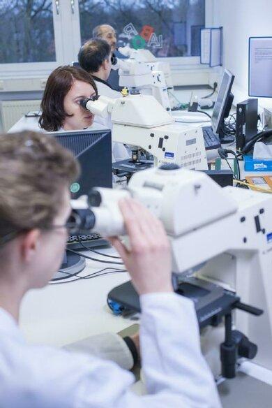 Unter dem Mikroskop sieht man bei Lymphozyten einen großen Zellkern, der nur von einem schmalen Zytoplasmarand umgeben wird
