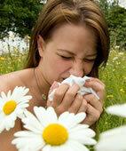 Heuschnupfengeplagte leiden häufig unter sogenannten Kreuzallergien gegen Lebensmittel