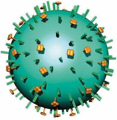 Grippe-Virus (schematisch)