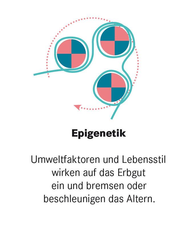 Infografik Altersforschung Epigenetik