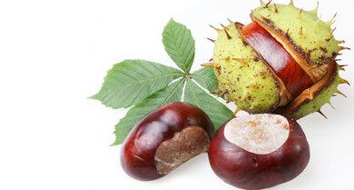 Extrakte aus Heilpflanzen wie zum Beispiel der Rosskastanie sollen die Venen unterstützen