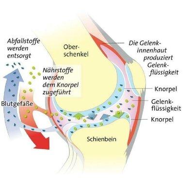 Bewegung im richtigen Maß stärkt den Stoffwechsel im Gelenk