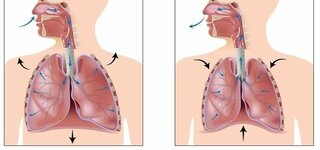 Illustration der Atmung
