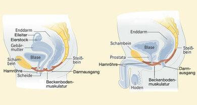 Organe im kleinen Becken bei der Frau (links) und beim Mann (Schemazeichnung)