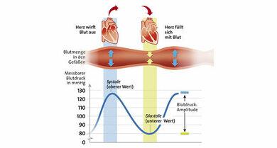 Herzaktion und Blutdruck