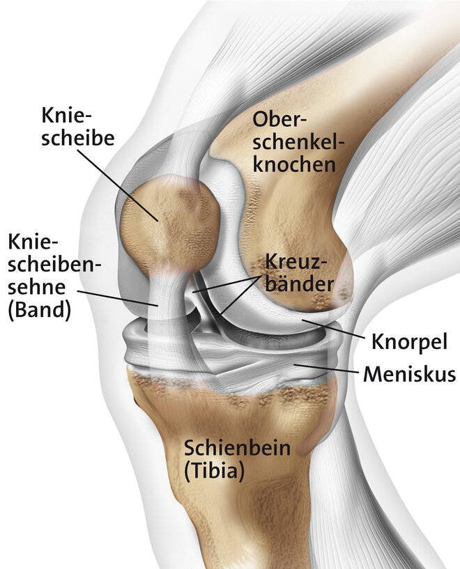 Kniegelenk (Schematische Darstellung)