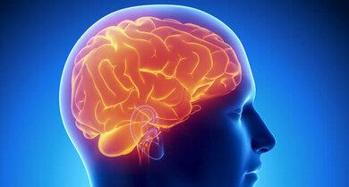 Gehirn (Schemazeichnung)