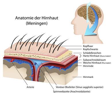 Anatomie der Hirnhäute und ihrer Zwischenräume