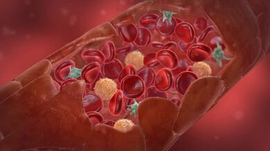 Blutplättchen gehören zu den Blutzellen