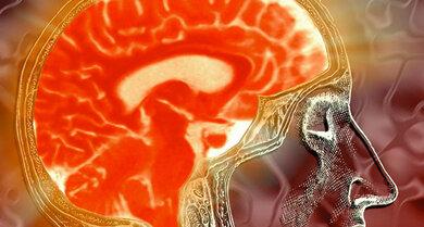 Steuerzentrale von Körper & Geist: Das Gehirn mit Hirnstamm und Beginn des Rückenmarks