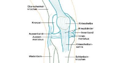 Übersicht über die verschiedenen Strukturen im Knie