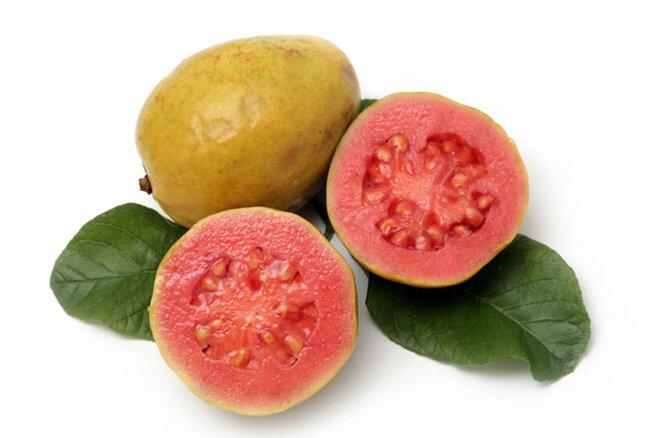 Echte Guave (Psidium guajava)